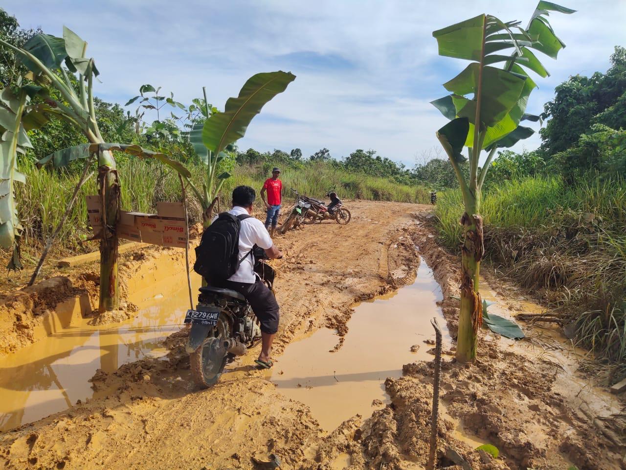 Jalan Tak Kunjung Diperbaiki, Warga Desa Mata Air Tanam Pisang Di Jalan